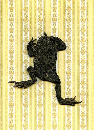 http://www.shannonguerrico.com/files/gimgs/37_frog003m-poussieres-ht50cm.jpg